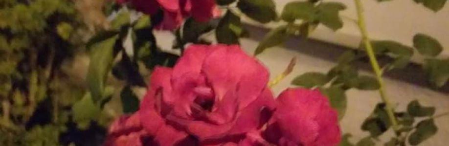 valdivia rodrigues Cover Image